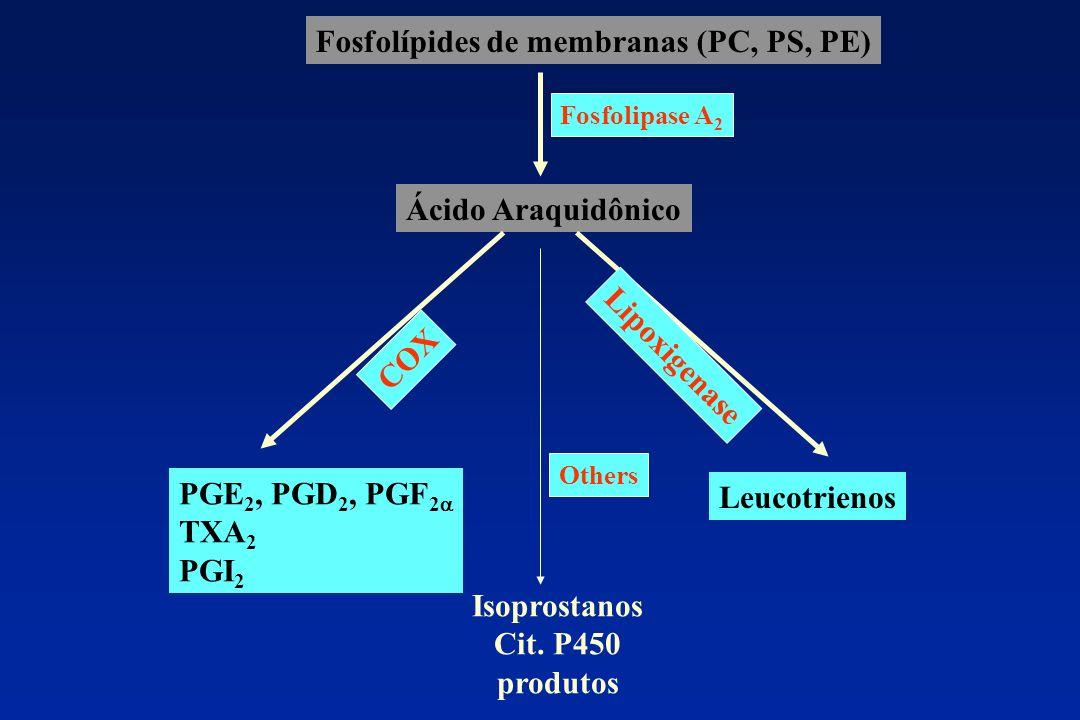 COX Isoprostanos Cit. P450 produtos