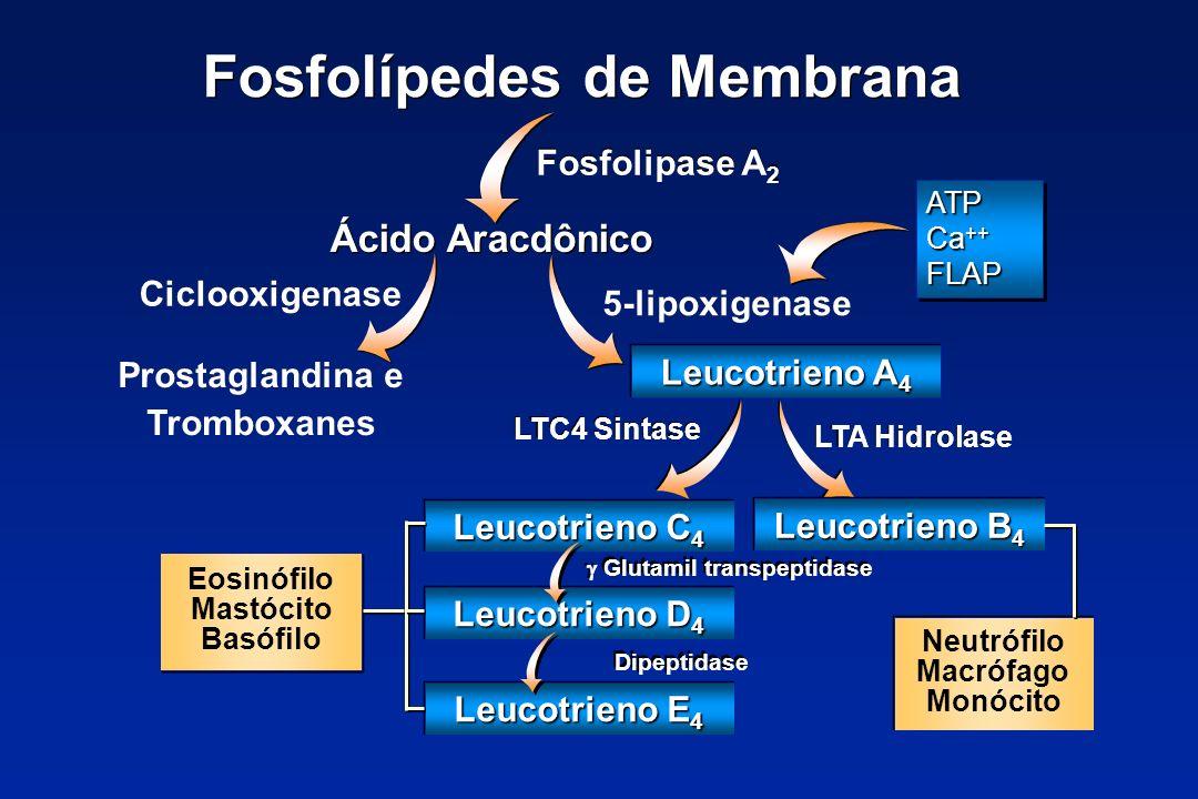 Fosfolípedes de Membrana