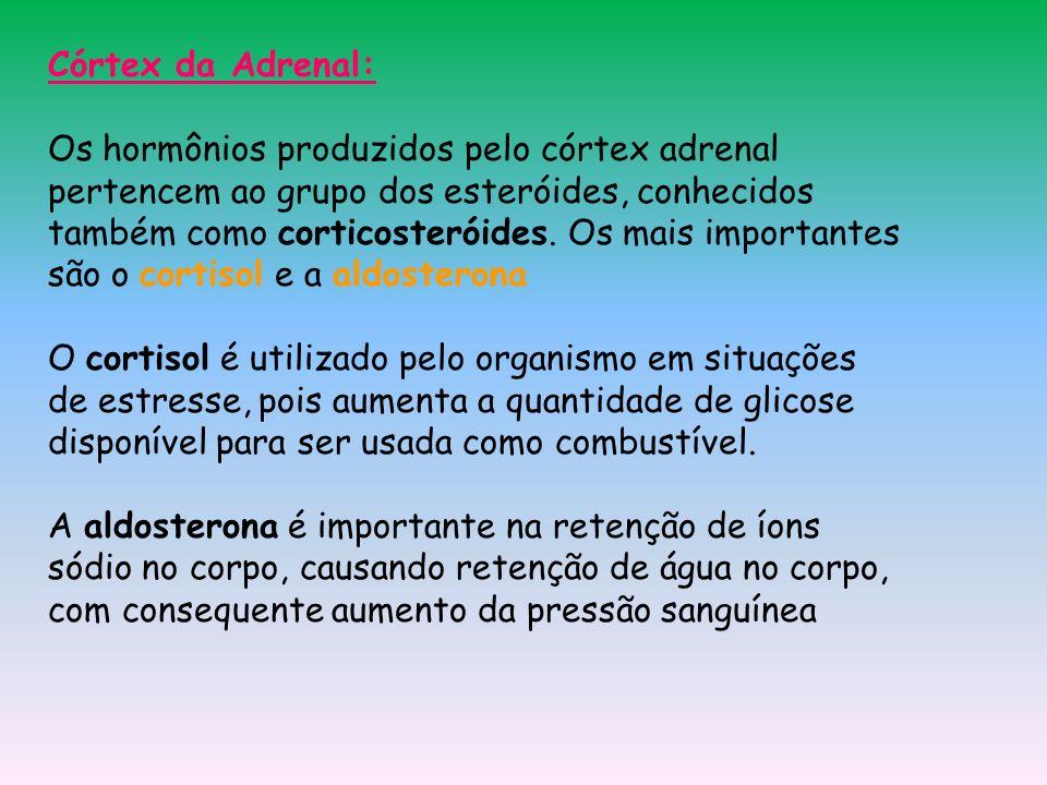 Córtex da Adrenal: