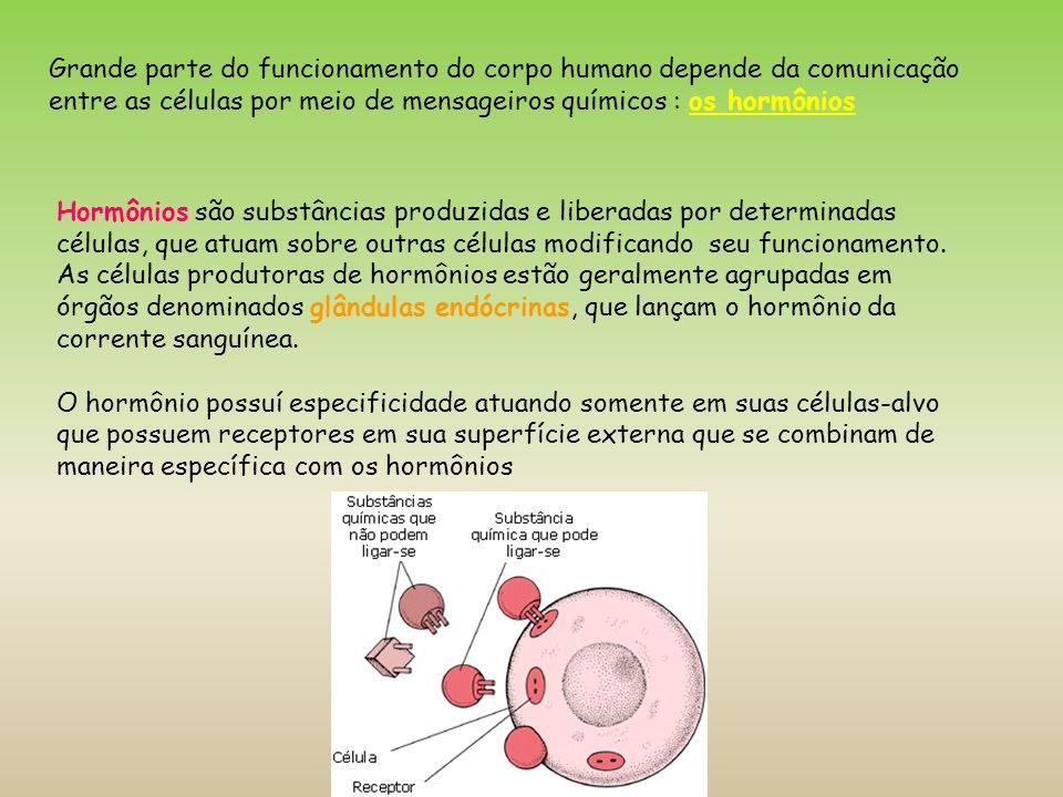 Grande parte do funcionamento do corpo humano depende da comunicação entre as células por meio de mensageiros químicos : os hormônios