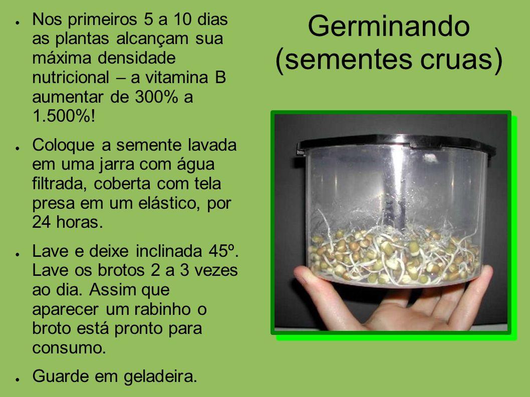 Germinando (sementes cruas)