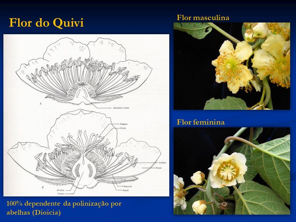 Flor do Quivi Flor masculina Flor feminina