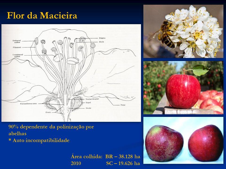 Flor da Macieira 90% dependente da polinização por abelhas