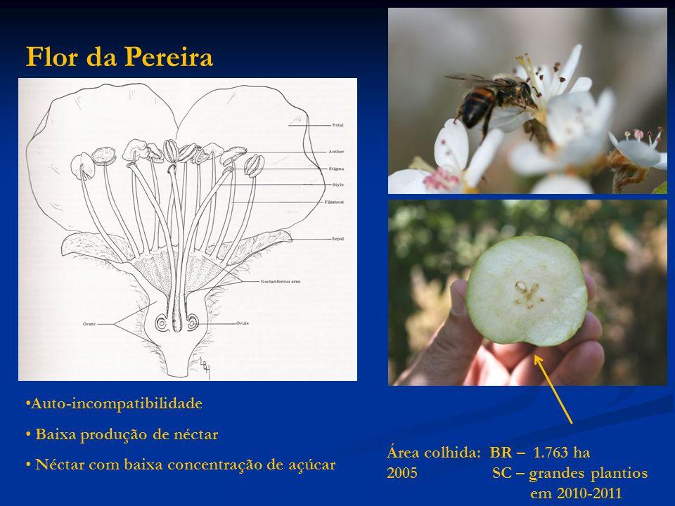 Flor da Pereira Auto-incompatibilidade Baixa produção de néctar