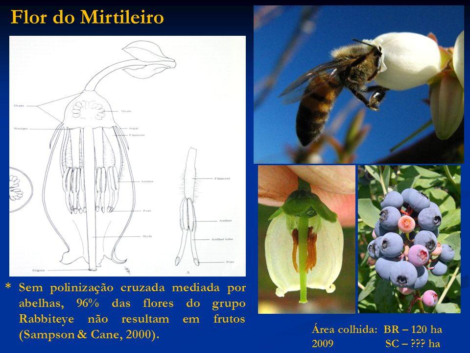 Flor do Mirtileiro* Sem polinização cruzada mediada por abelhas, 96% das flores do grupo Rabbiteye não resultam em frutos (Sampson & Cane, 2000).