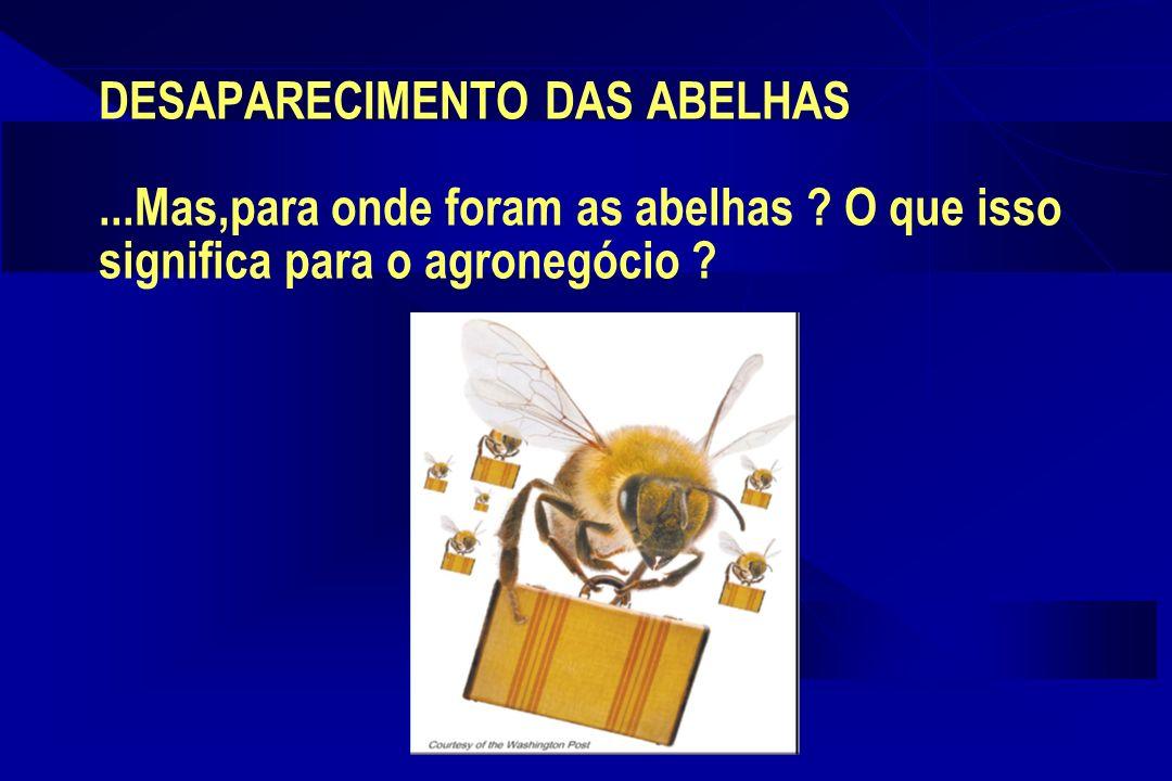 DESAPARECIMENTO DAS ABELHAS. Mas,para onde foram as abelhas
