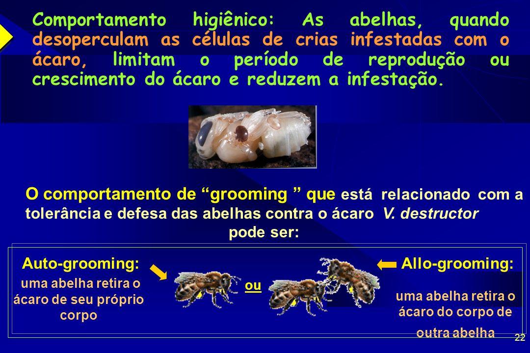 Comportamento higiênico: As abelhas, quando desoperculam as células de crias infestadas com o ácaro, limitam o período de reprodução ou crescimento do ácaro e reduzem a infestação.