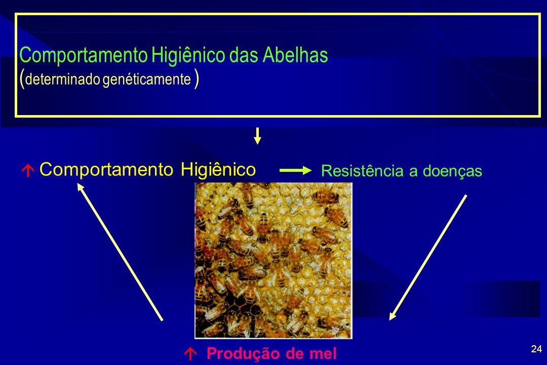 Comportamento Higiênico das Abelhas (determinado genéticamente )