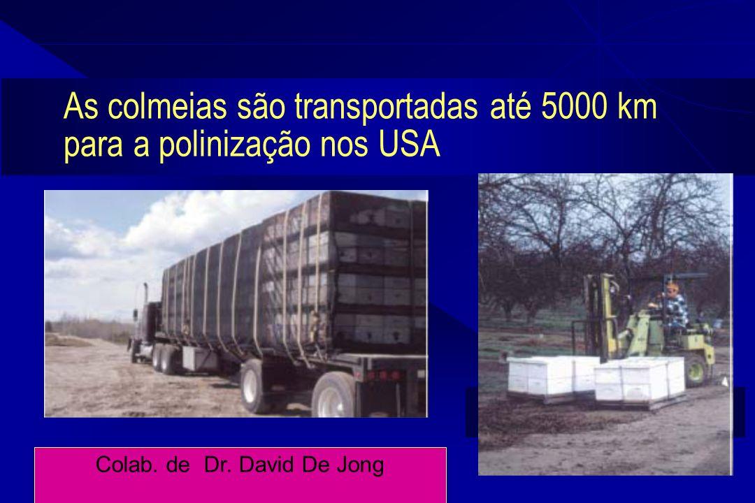 As colmeias são transportadas até 5000 km para a polinização nos USA