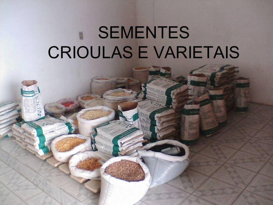 SEMENTES CRIOULAS E VARIETAIS