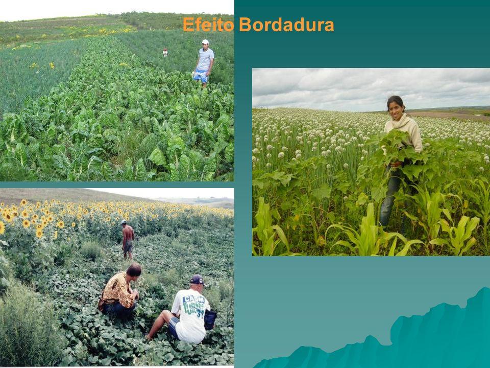 Efeito Bordadura Foto: BioNatur