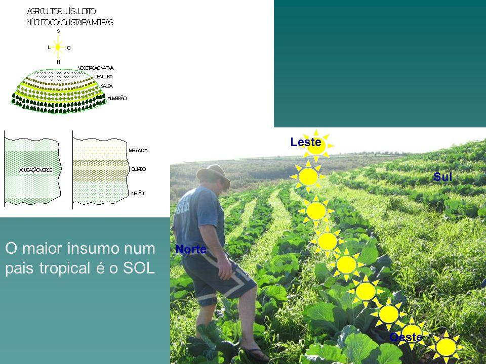 O maior insumo num pais tropical é o SOL