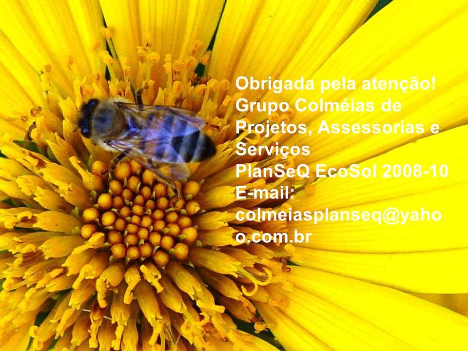Obrigada pela atenção! Grupo Colméias de Projetos, Assessorias e Serviços. PlanSeQ EcoSol 2008-10.