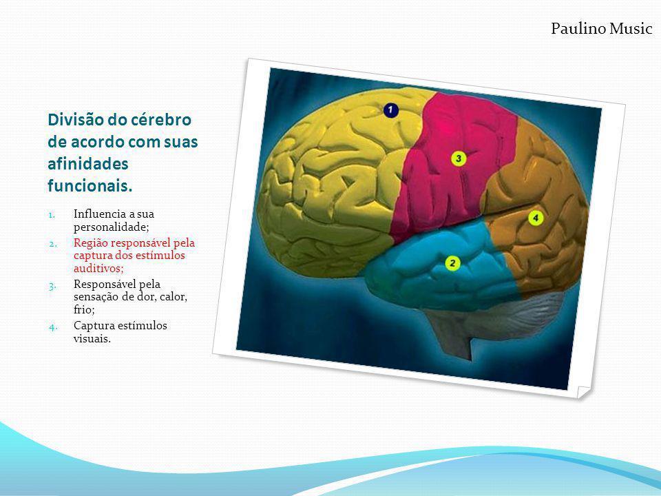 Divisão do cérebro de acordo com suas afinidades funcionais.