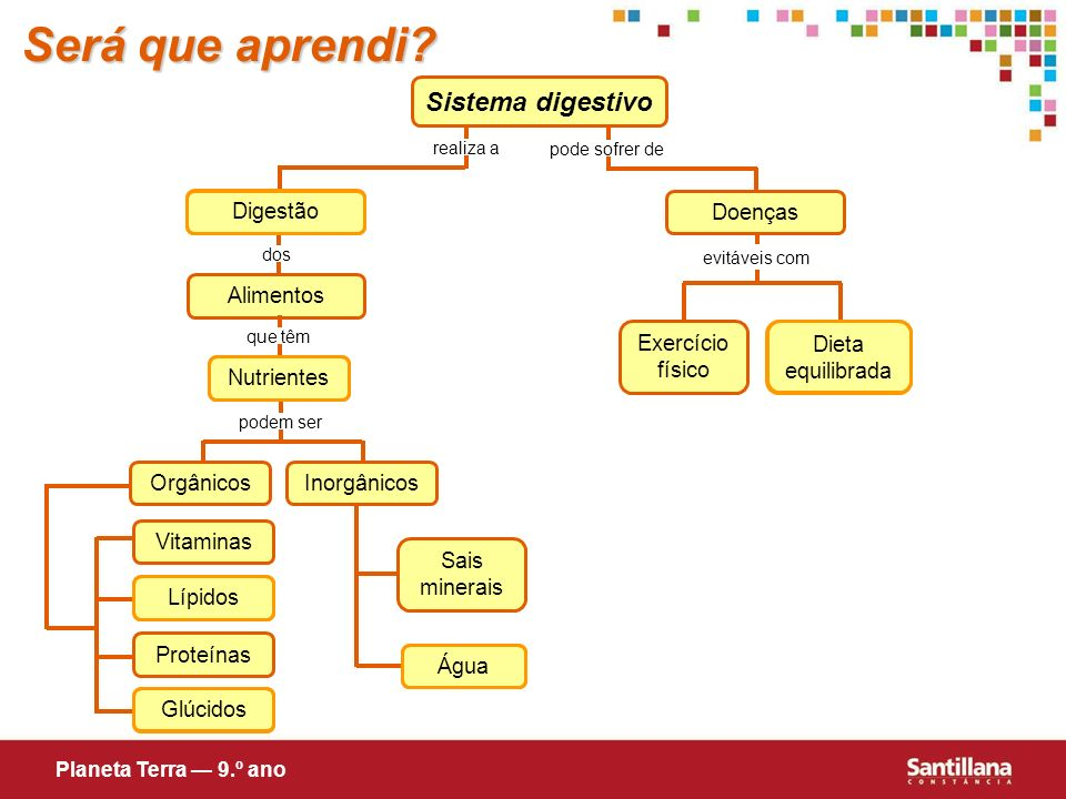 Será que aprendi Sistema digestivo Digestão Doenças Alimentos