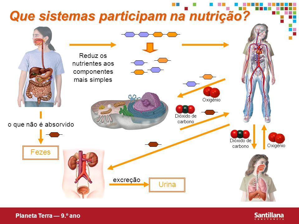 Reduz os nutrientes aos componentes mais simples