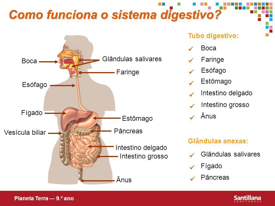 Como funciona o sistema digestivo