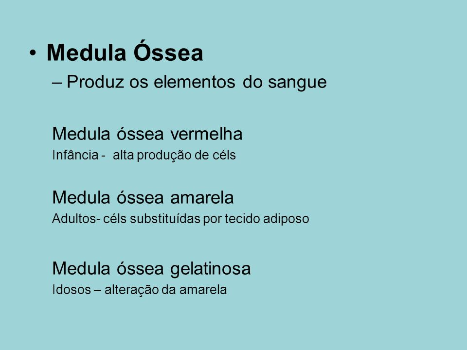 Medula Óssea Produz os elementos do sangue Medula óssea vermelha