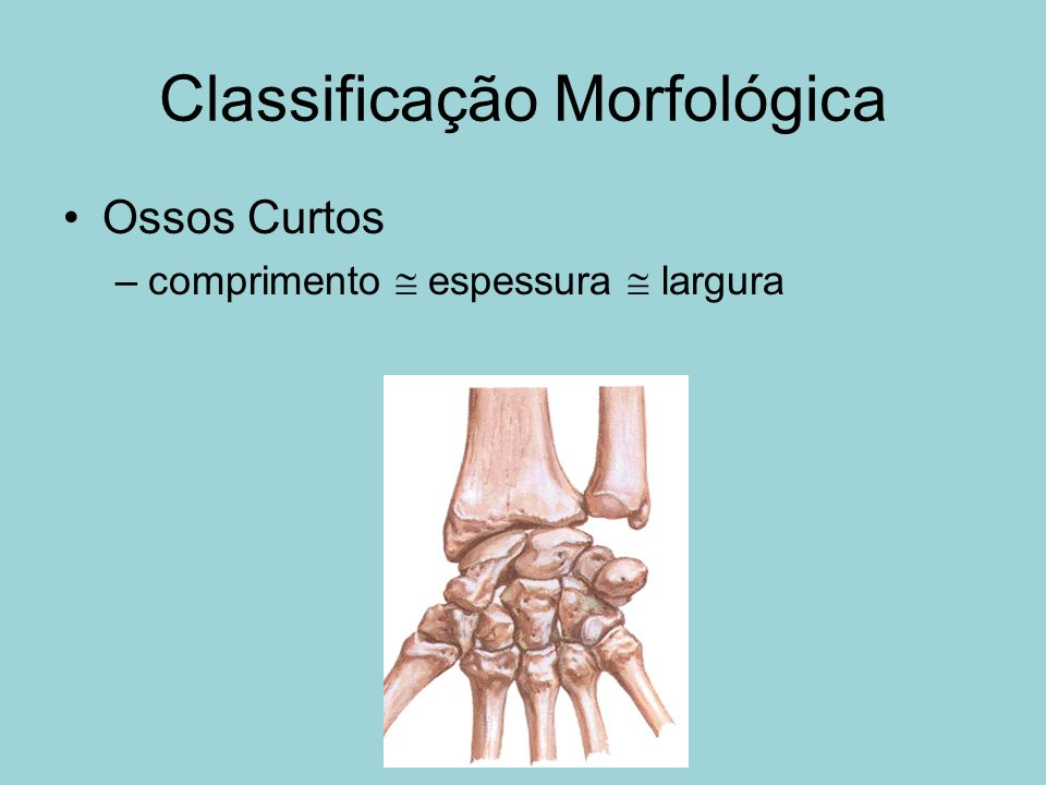 Classificação Morfológica
