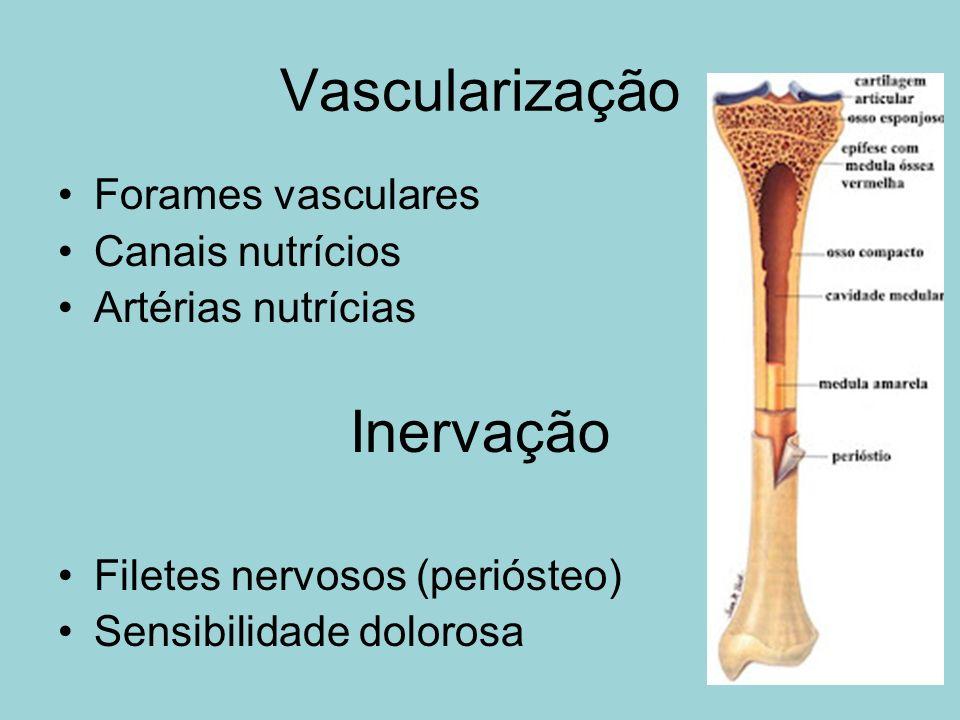 Vascularização Inervação Forames vasculares Canais nutrícios