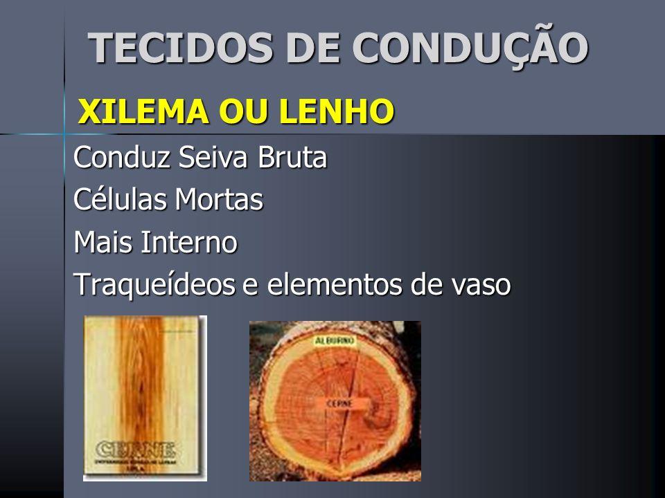 TECIDOS DE CONDUÇÃO XILEMA OU LENHO Conduz Seiva Bruta Células Mortas