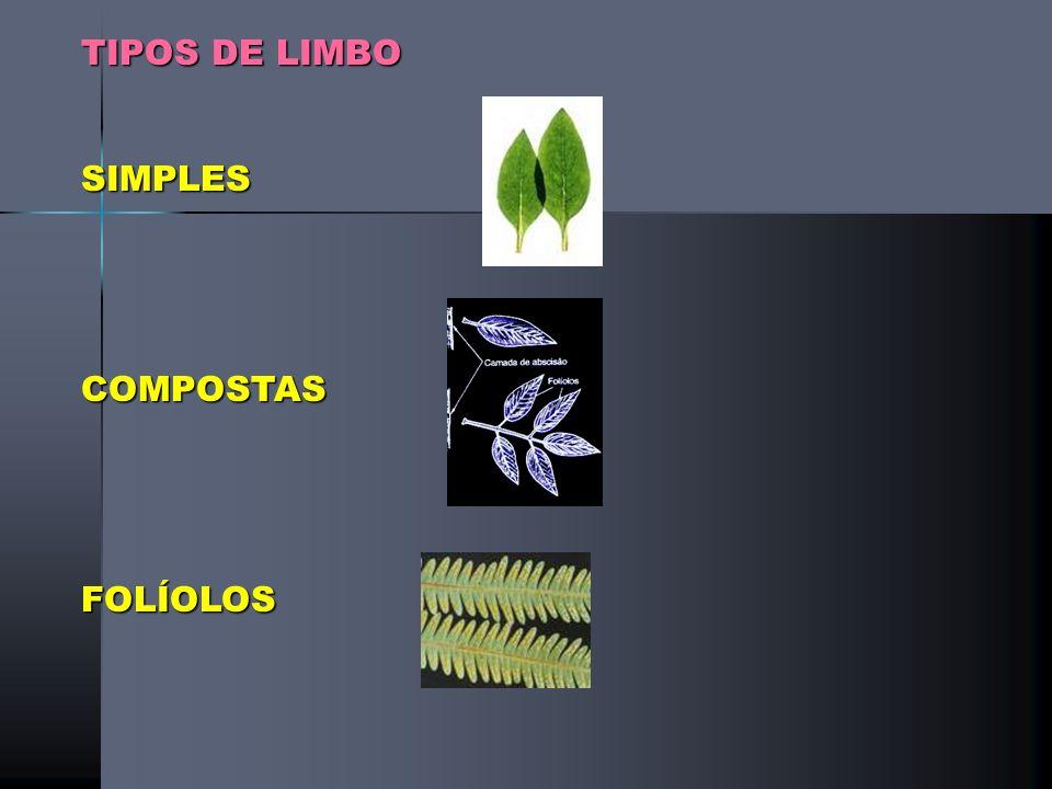 TIPOS DE LIMBO SIMPLES COMPOSTAS FOLÍOLOS