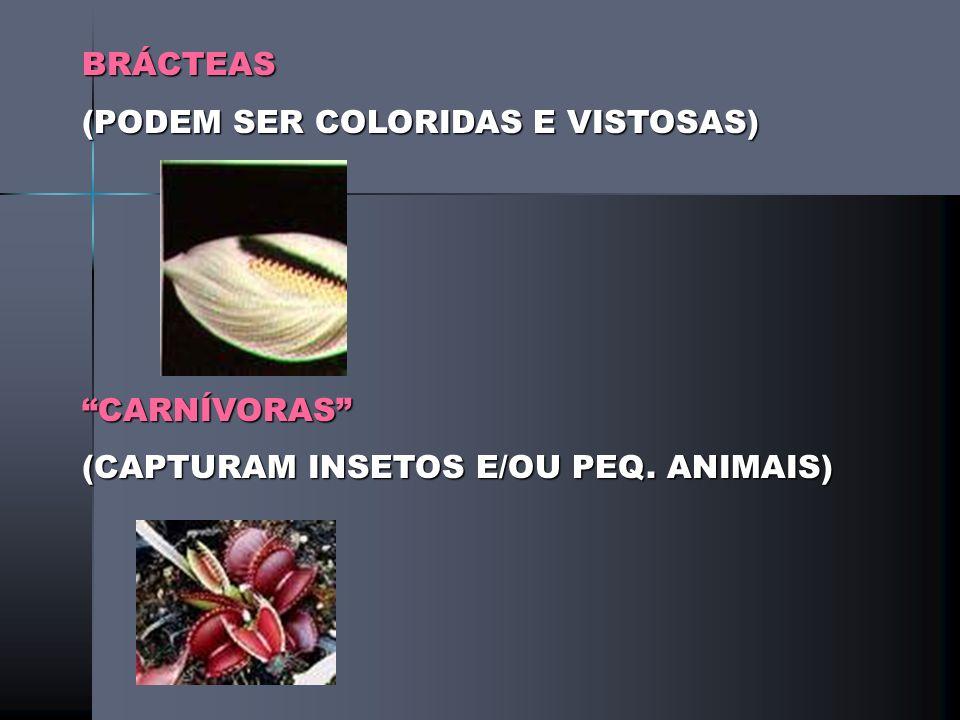 BRÁCTEAS (PODEM SER COLORIDAS E VISTOSAS) CARNÍVORAS (CAPTURAM INSETOS E/OU PEQ. ANIMAIS)