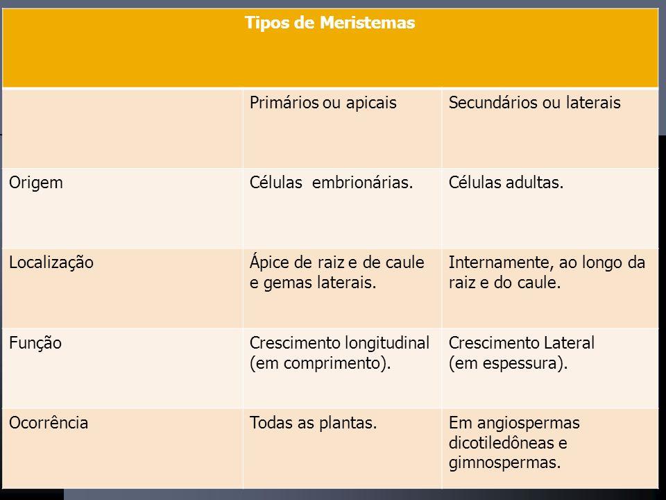 Tipos de Meristemas Primários ou apicais. Secundários ou laterais. Origem. Células embrionárias.