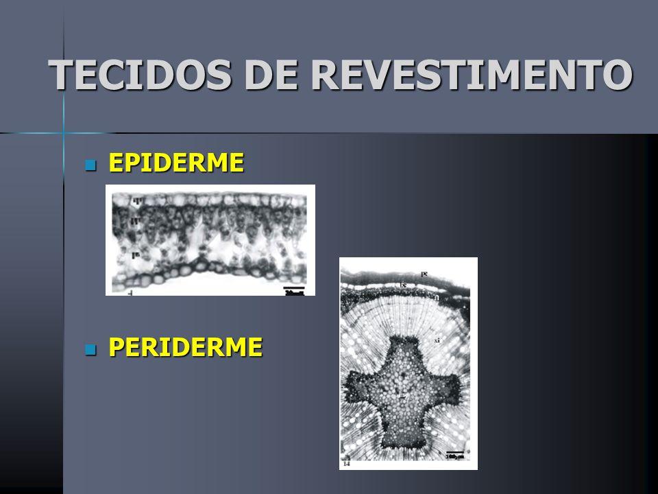 TECIDOS DE REVESTIMENTO