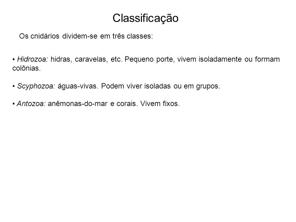 Classificação Os cnidários dividem-se em três classes: