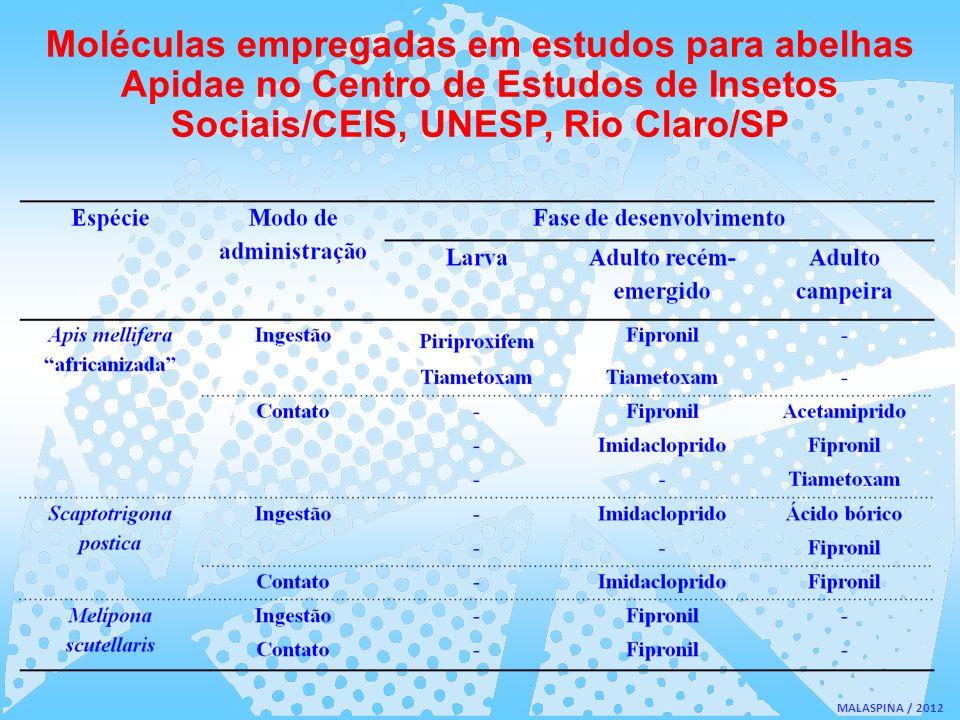 Moléculas empregadas em estudos para abelhas Apidae no Centro de Estudos de Insetos Sociais/CEIS, UNESP, Rio Claro/SP