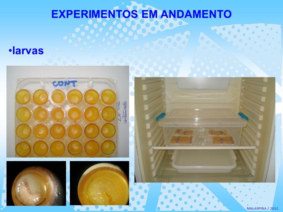 EXPERIMENTOS EM ANDAMENTO