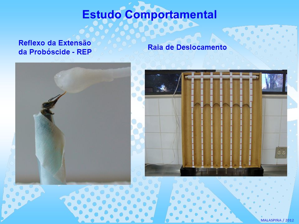 Estudo Comportamental