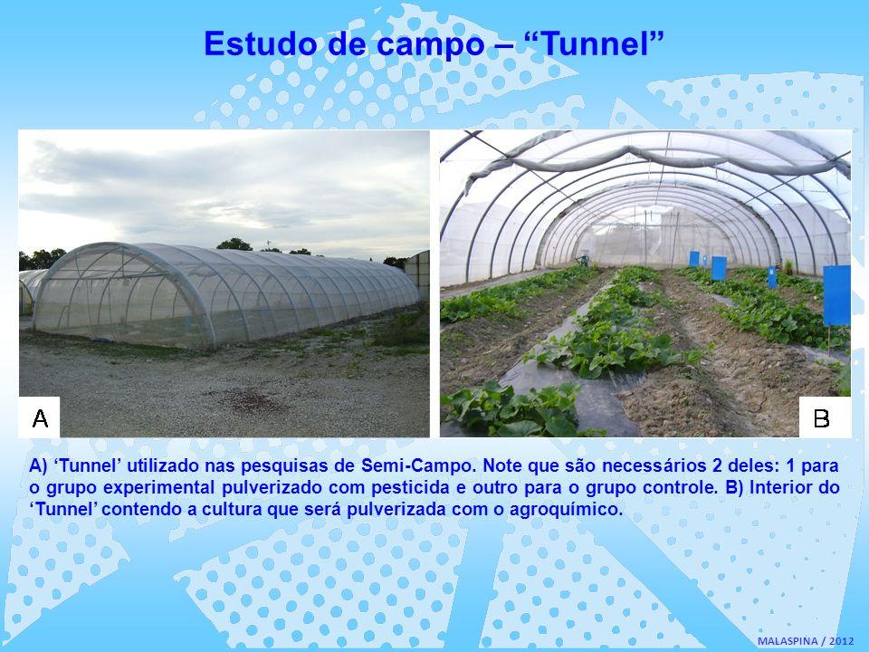 Estudo de campo – Tunnel