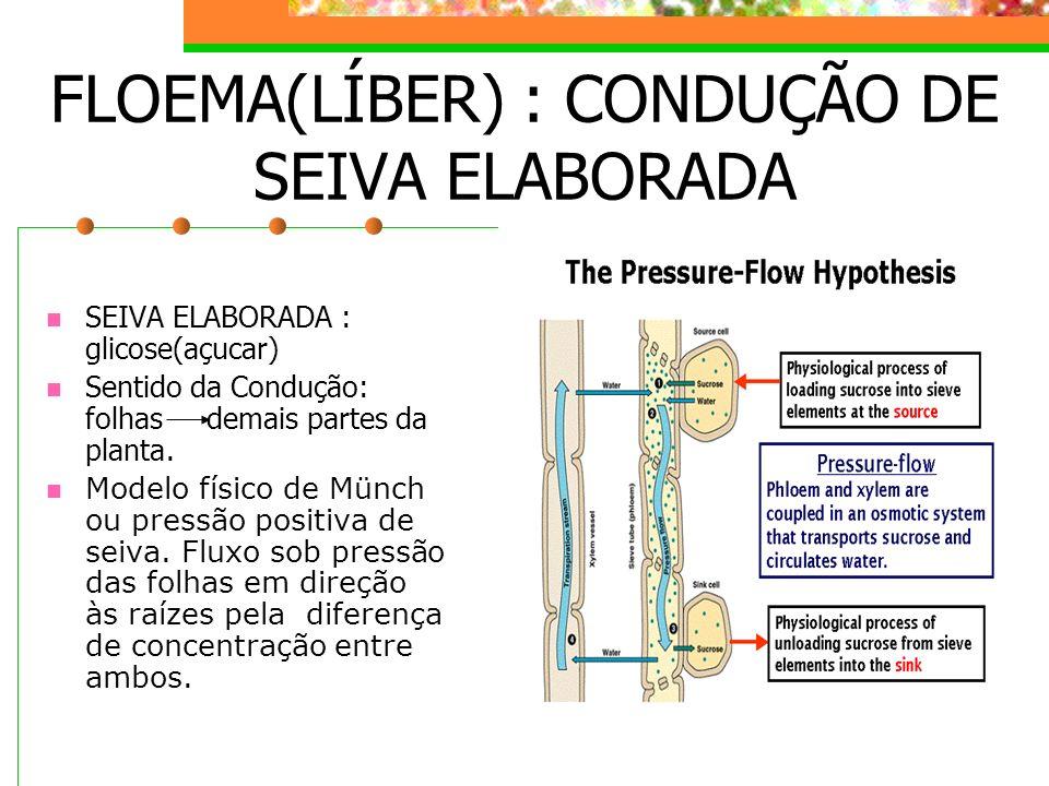 FLOEMA(LÍBER) : CONDUÇÃO DE SEIVA ELABORADA
