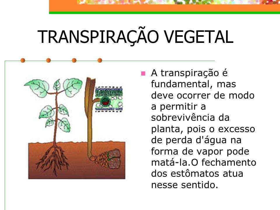 TRANSPIRAÇÃO VEGETAL