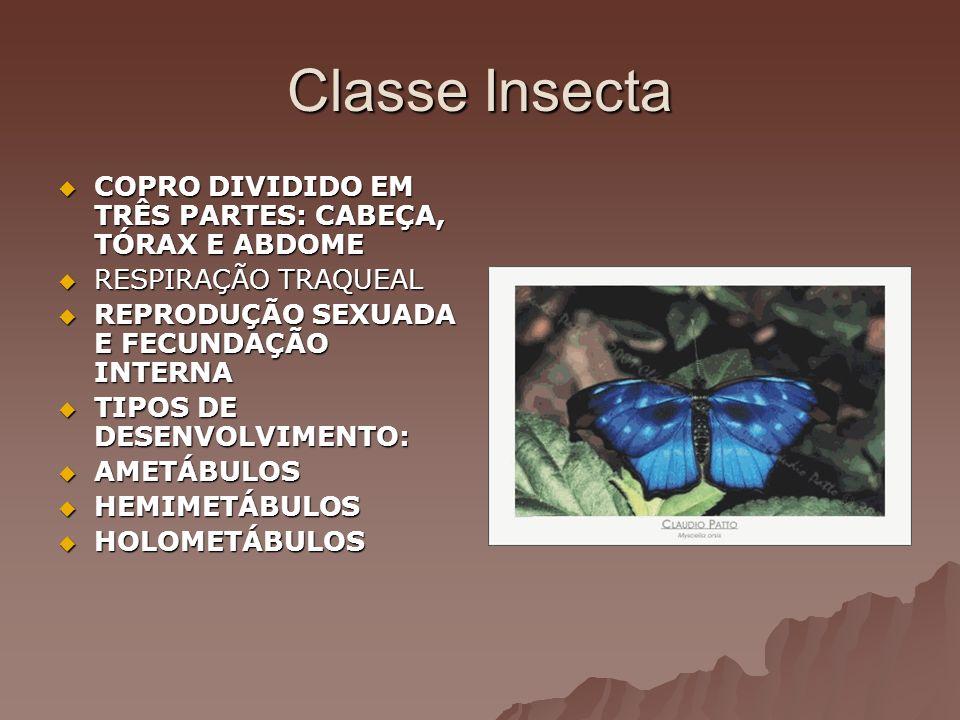 Classe Insecta COPRO DIVIDIDO EM TRÊS PARTES: CABEÇA, TÓRAX E ABDOME