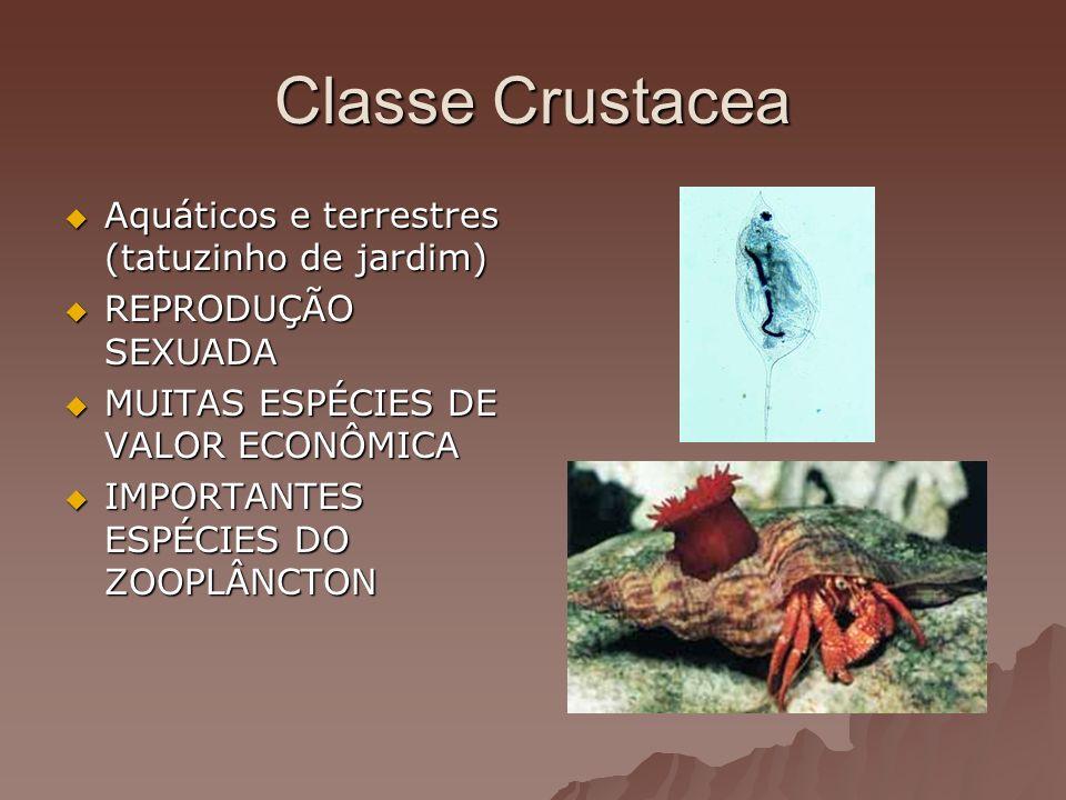 Classe Crustacea Aquáticos e terrestres (tatuzinho de jardim)