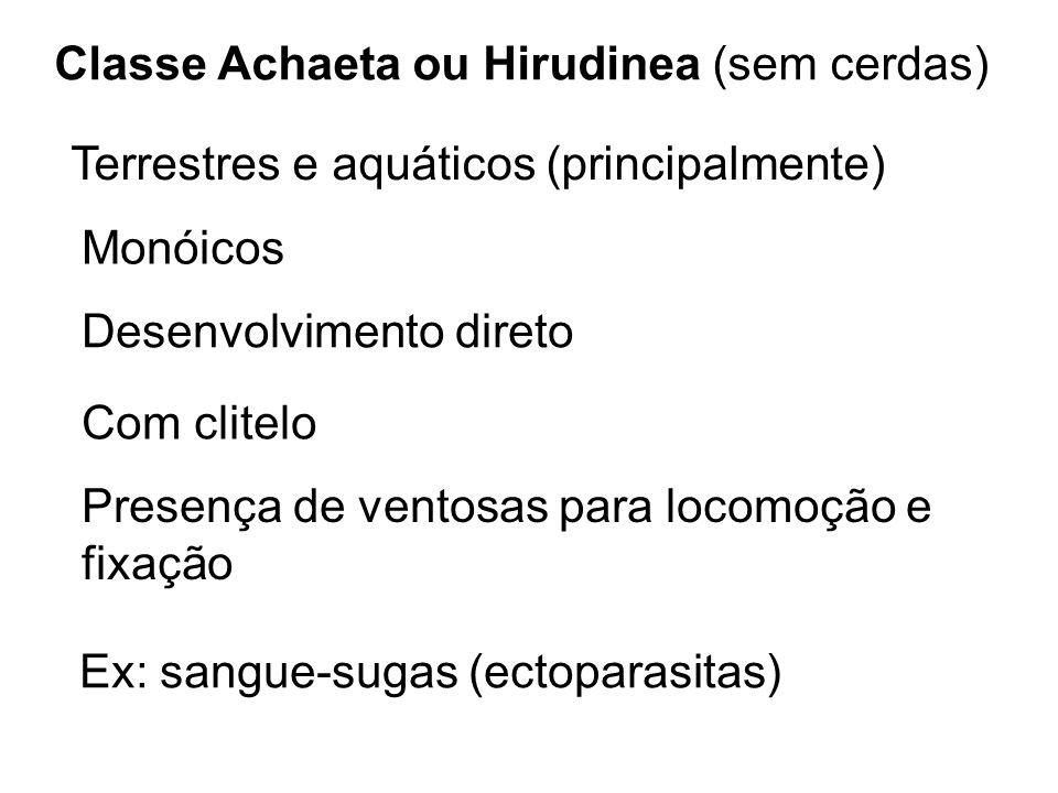 Classe Achaeta ou Hirudinea (sem cerdas)