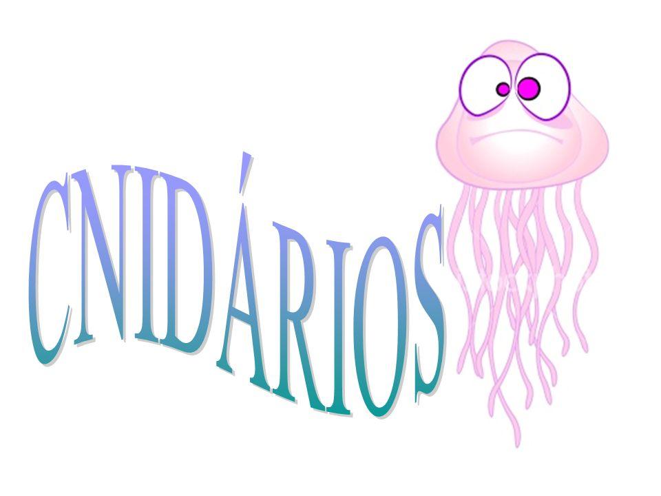 CNIDÁRIOS