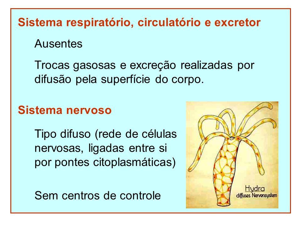 Sistema respiratório, circulatório e excretor
