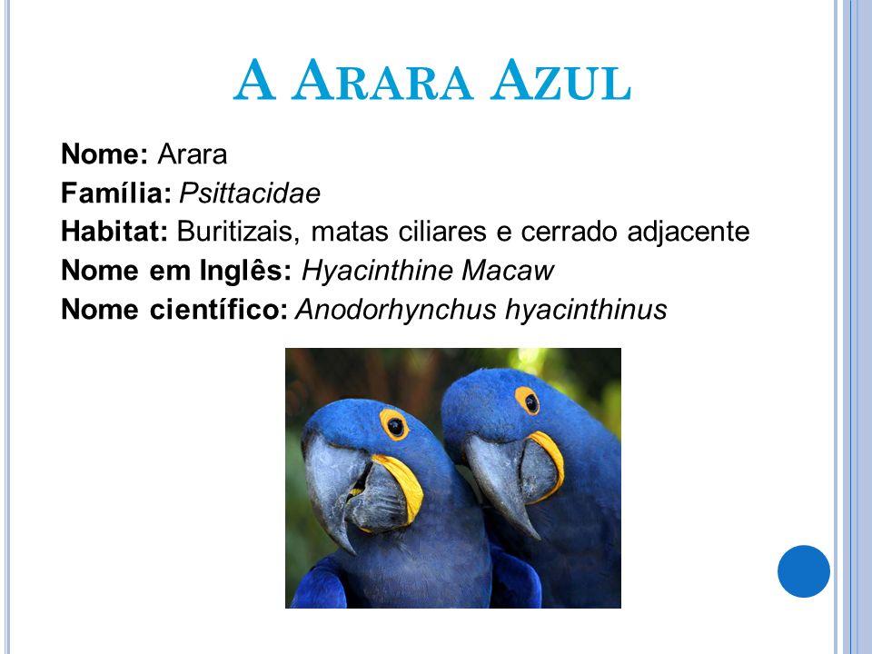A Arara Azul