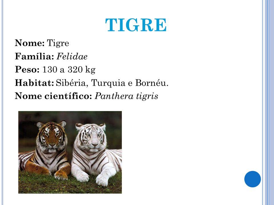 TIGRENome: Tigre Família: Felidae Peso: 130 a 320 kg Habitat: Sibéria, Turquia e Bornéu.