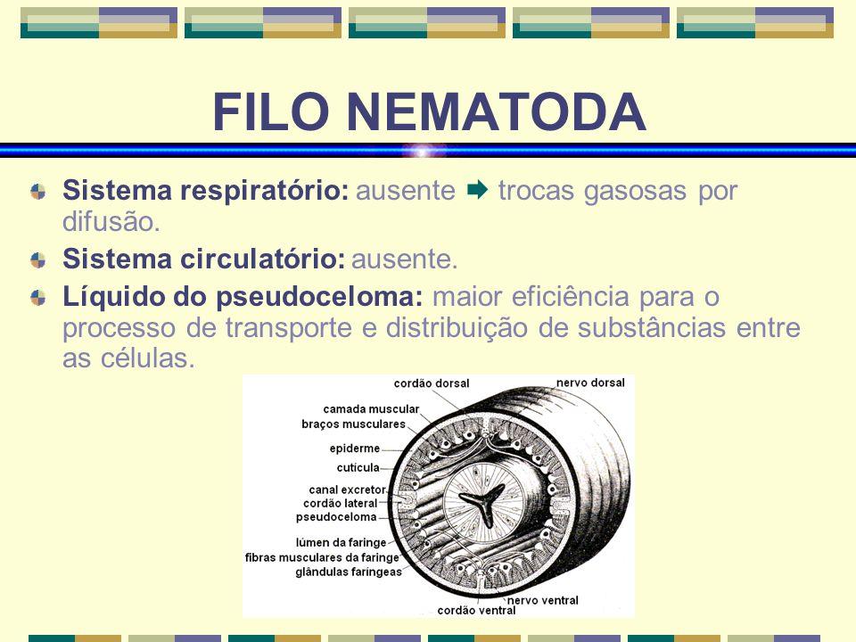 FILO NEMATODA Sistema respiratório: ausente  trocas gasosas por difusão. Sistema circulatório: ausente.