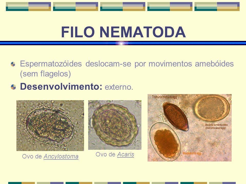 FILO NEMATODA Desenvolvimento: externo.