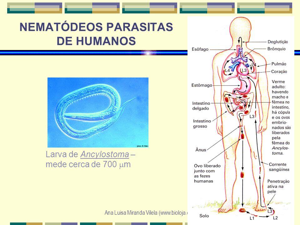 NEMATÓDEOS PARASITAS DE HUMANOS