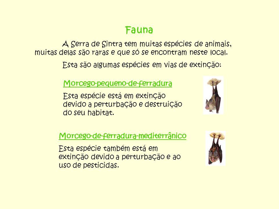 Fauna A Serra de Sintra tem muitas espécies de animais, muitas delas são raras e que só se encontram neste local.