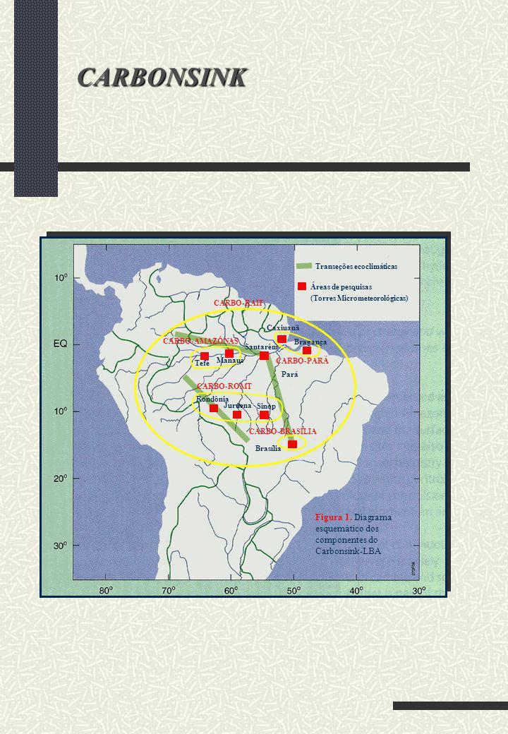 CARBONSINK Transeções ecoclimáticas. Áreas de pesquisas. (Torres Micrometeorológicas) CARBO-RAIF.