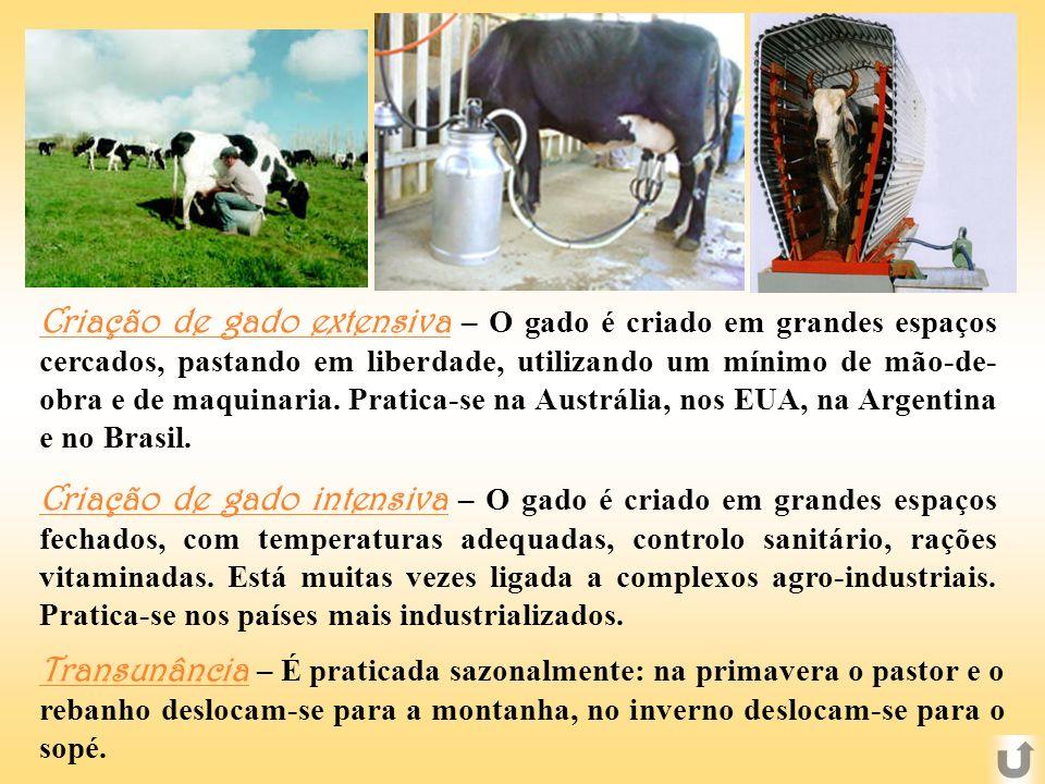 Criação de gado extensiva – O gado é criado em grandes espaços cercados, pastando em liberdade, utilizando um mínimo de mão-de-obra e de maquinaria. Pratica-se na Austrália, nos EUA, na Argentina e no Brasil.