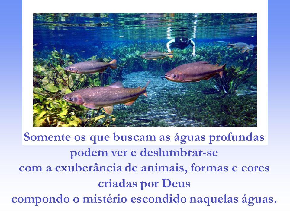 Somente os que buscam as águas profundas podem ver e deslumbrar-se